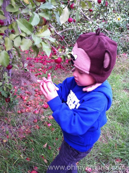 Farley loved getting to pull apples off trees.