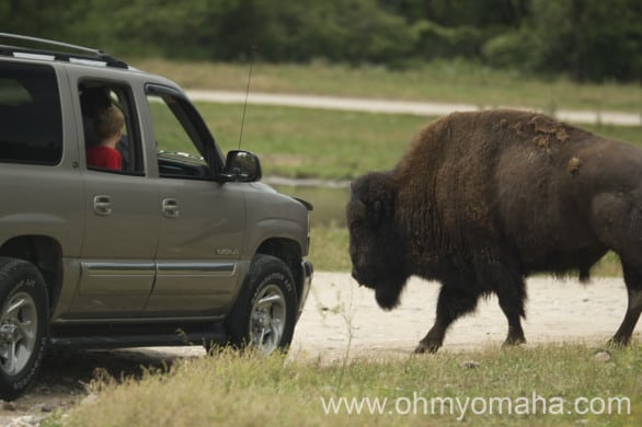 Reason #1 you want to keep your speed in check at the Wildlife Safari in Nebraska.