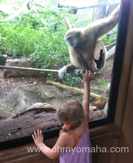 High five the zoo residents.