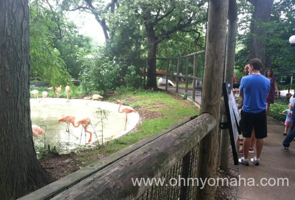 Checking out the flamingos at the zoo.