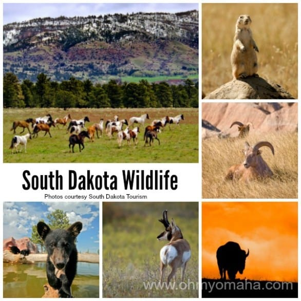 South Dakota Collage