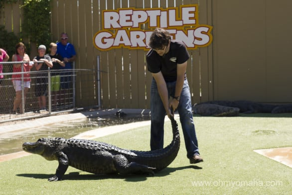 You know you want to see the alligator show. Heard of alligator wrestling?