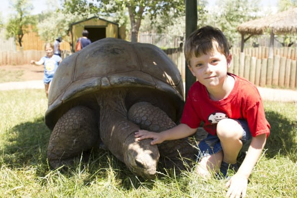 The tortoises roamed free in a fenced-in yard at Reptile Gardens. You could pet them and ask handlers questions.