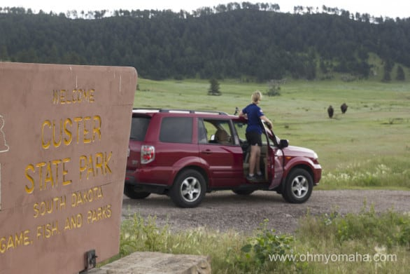 How's that for an entrance to Custer State Park? Buffalo in the distance.