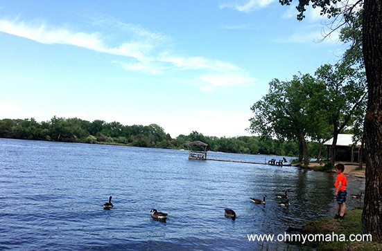 Feeding the greedy, fat geese at Victory Lake at the Fremont Lakes State Recreation Area.